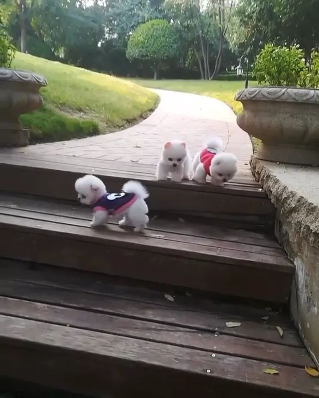 puppies downstairs look very cute. - Video & GIFs   puppies, pet, downstairs, look, very cute