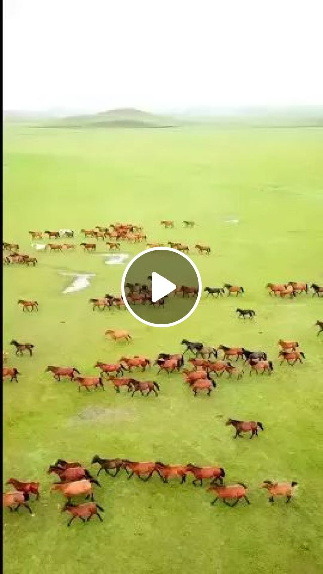 Horses Running On The Steppe Feel Very Free - Video & GIFs   horses, running, steppe, feel, free, nature, China travel