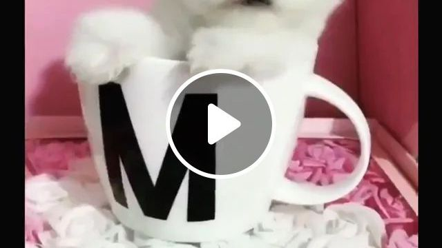 Lovely Puppy In A Porcelain Cup - Video & GIFs | puppy, lovely, in a cup, porcelain, pet
