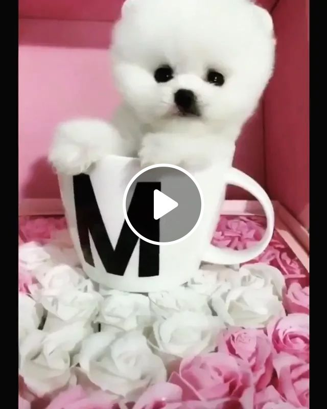 Lovely puppy in a porcelain cup