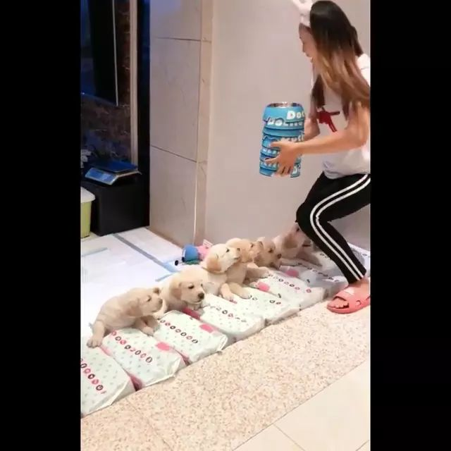Dinner time of puppies