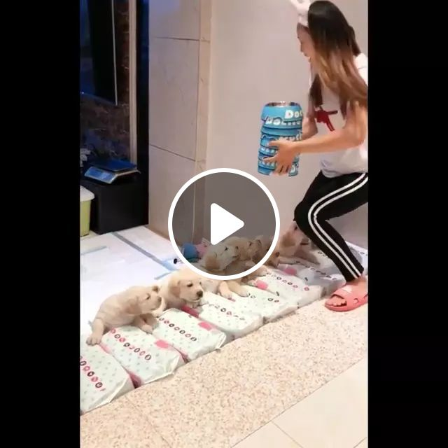 Dinner Time Of Puppies - Video & GIFs | dinner time, puppies, dog food, adorable, lovely