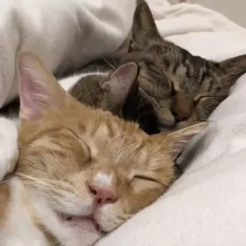 Cats like to sleep in a comfortable and luxurious bed