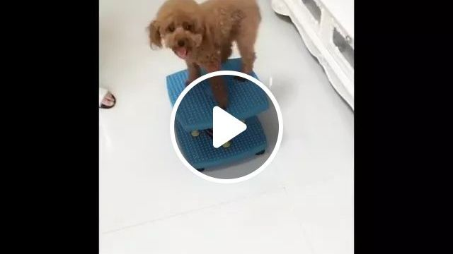 Puppy Also Wants To Exercise - Video & GIFs | puppy, adorable, wants, exercise, funny