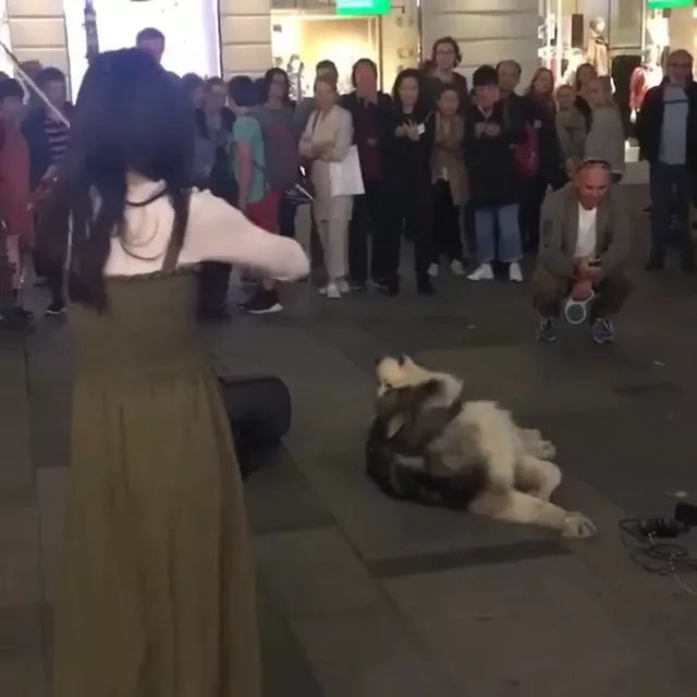 Great, violinist in Vienna with dog singing along