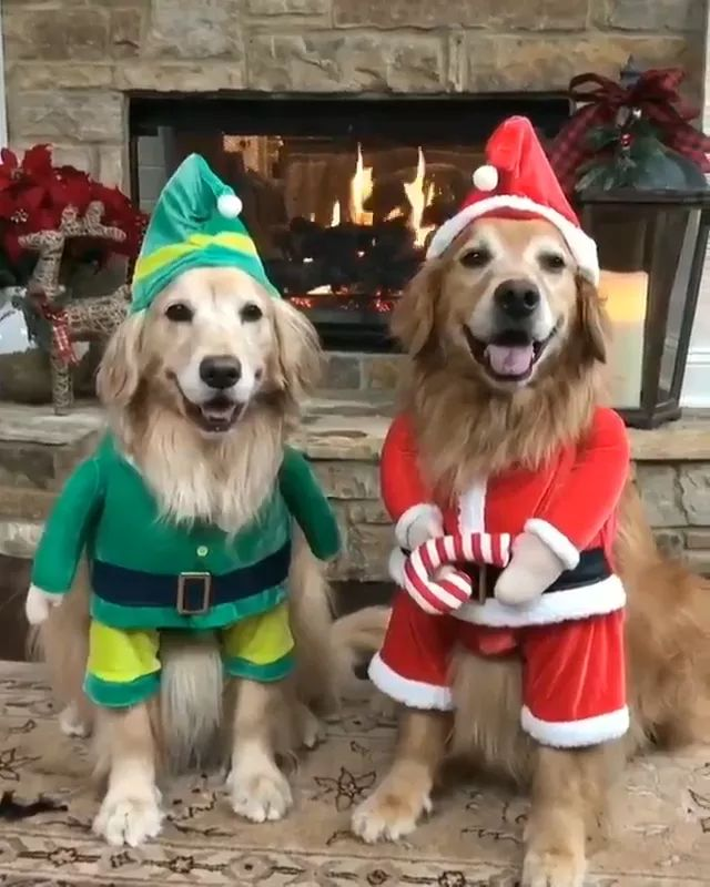 Winter, two heated dogs by fireplace and pet clothes look lovely