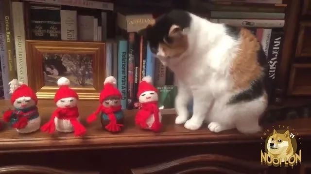 Cat playing with toys on the bookshelf