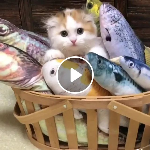 Cat With Stuffed Animals In Living Room - Video & GIFs | cats, animals, pets, stuffed animals, in the living room, luxurious furniture