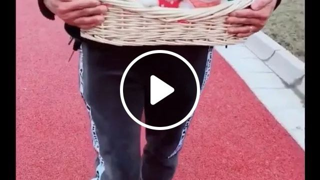 A Man With Basket Has A Lot Of Puppies - Video & GIFs | Man, fashion clothes, fashion shoes, with basket, puppy