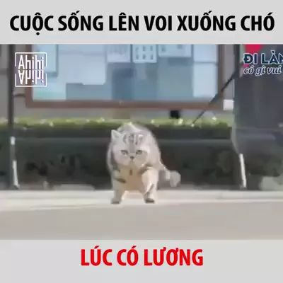 Cats are walking in street