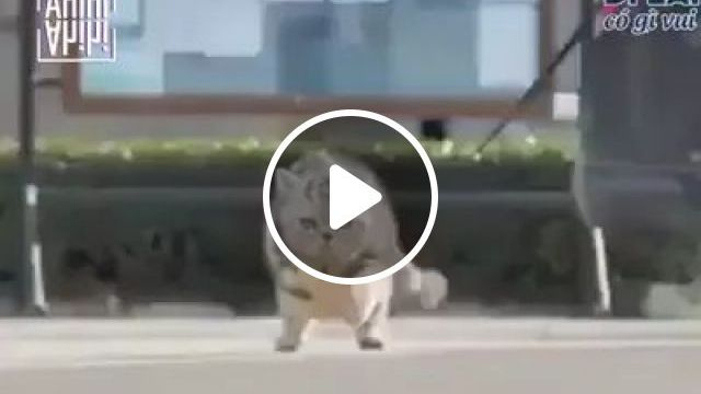 Cats are walking in street, cats, pets, animals, walking, street, luxury cars