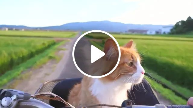 cat is traveling to village by bike, Cats, animals, pets, japan travel, village, bike