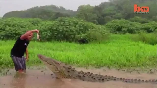 a man is taking care of giant crocodile in Indonesia - Video & GIFs | Brave man, taking care of animals, giant crocodiles, Indonesia travel