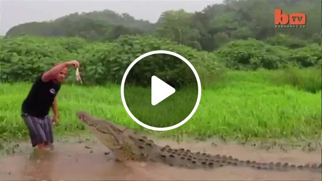 a man is taking care of giant crocodile in Indonesia, Brave man, taking care of animals, giant crocodiles, Indonesia travel