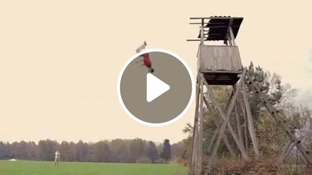 Jump From Top Of Man - Video & GIFs   Jump, performance, talent, man, male fashion