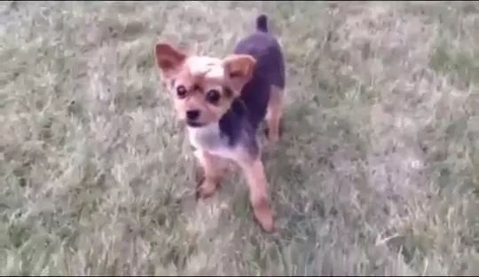 Lovely puppy has ability to rap