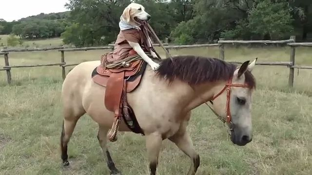 on the farm, horse-riding dog looks like upper class