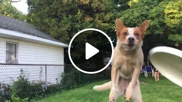 dog ran fast and plunged into my smartphone