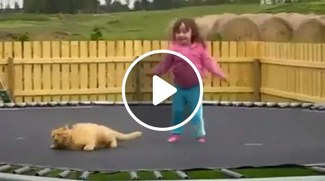 Baby and cat jumping on trampoline