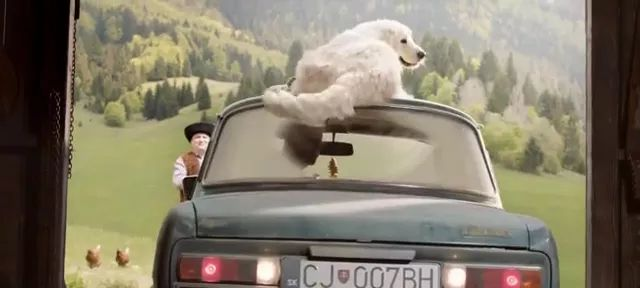 smart dog uses tail to clean windshield.