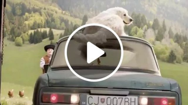 smart dog uses tail to clean windshield., dog, smart, tail, wipe, windshield, luxury car