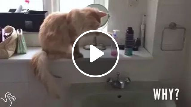 Cats love to play with objects, Smart cats, funny animals, pets