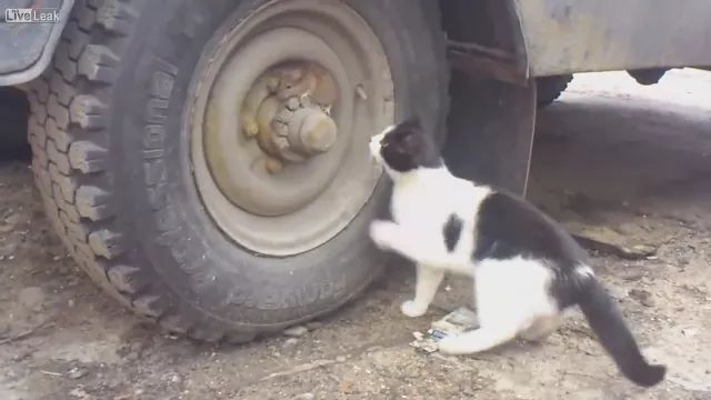 cat wants to play with mouse near truck