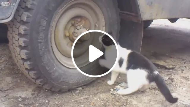 cat wants to play with mouse near truck, Smart cats, cute mice, trucks, wheels, funny animals, pets