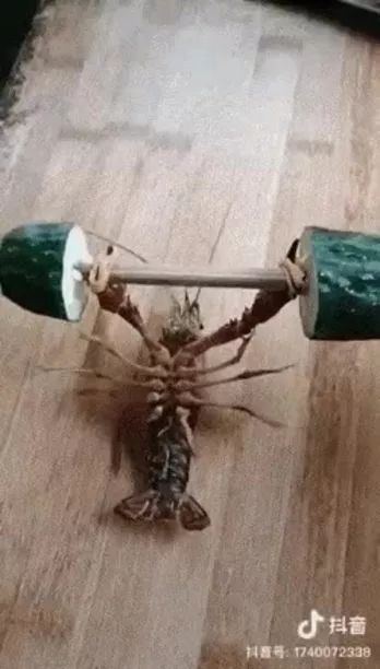 power of shrimp on a wooden floor