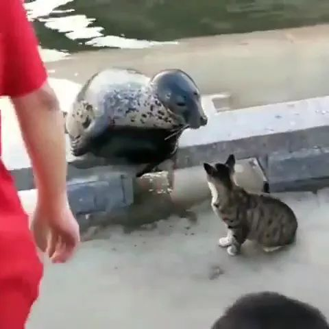 Seal just wants to play with cat