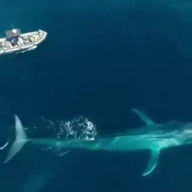 Great, Whale disappearing into depths of ocean - Video & GIFs | tourist boats,sea travel,sea animals,beautiful ocean