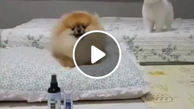 Dogs In Luxury House - Video & GIFs | funny dogs, animals, luxurious houses, animal care