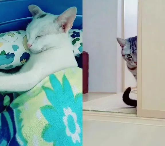 cat is sleeping in luxury bedroom - Video & GIFs | cute cats,funny animals,luxurious bedrooms,pets