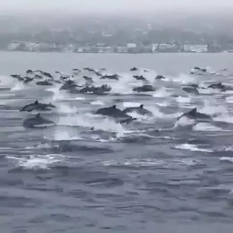 Dolphins move on the sea