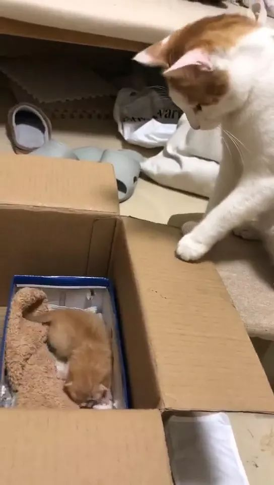 Mom cat takes care of kitten very well