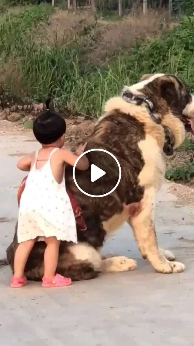 Giant Dog Playing With Baby - Video & GIFs | giant dog, cute baby, baby clothes