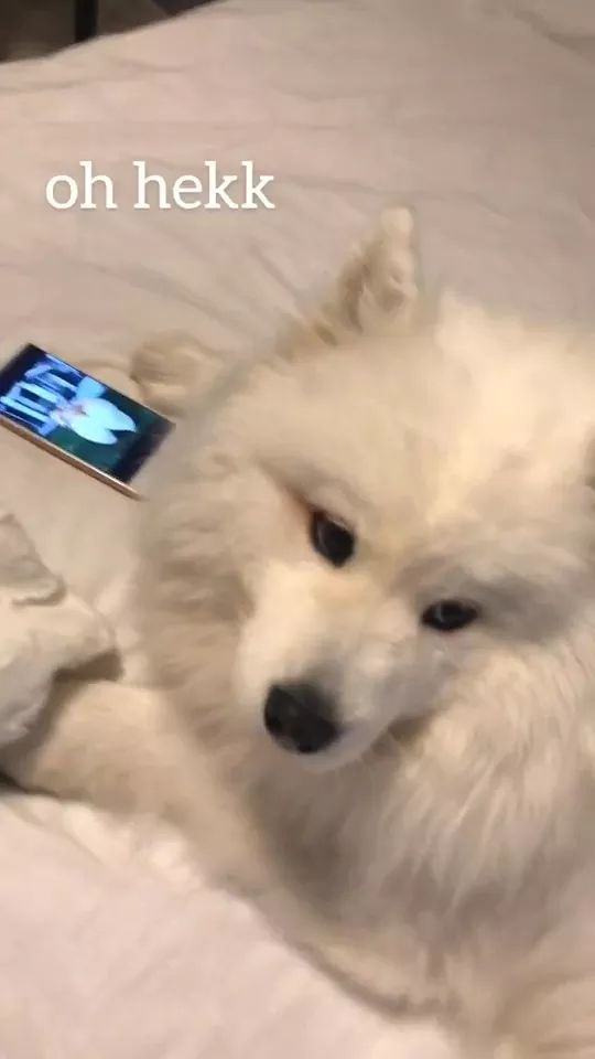 When you're on the phone past bedtime and you hear door click - Video & GIFs   smart phones,web apps,soft beds,luxury apartments,dog breeds,pets,animals