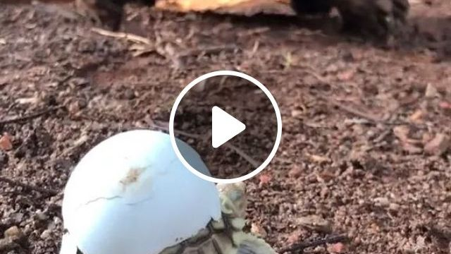 Mother Turtle Is Taking Care Of Baby Turtle - Video & GIFs   mother turtles, baby turtles, friendly animals