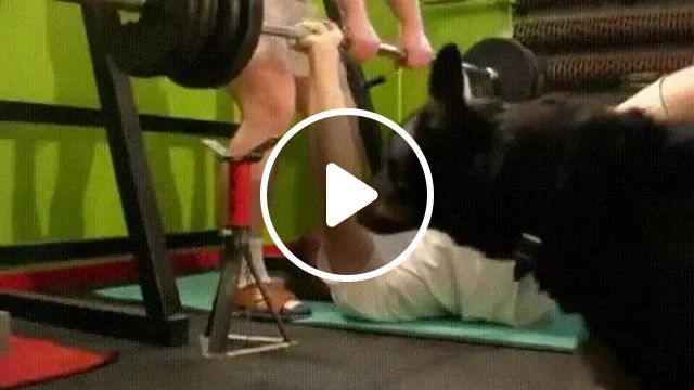 Dog Admires Strength Of A Man - Video & GIFs | talented dogs, sports equipment, strength of men, sports clothes, sports shoes