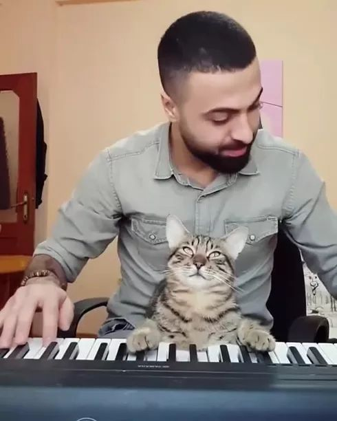 My cat loves playing piano