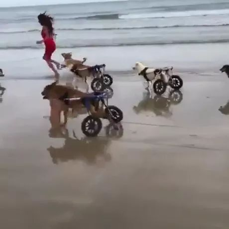 Happy moments of dogs at tangier beach