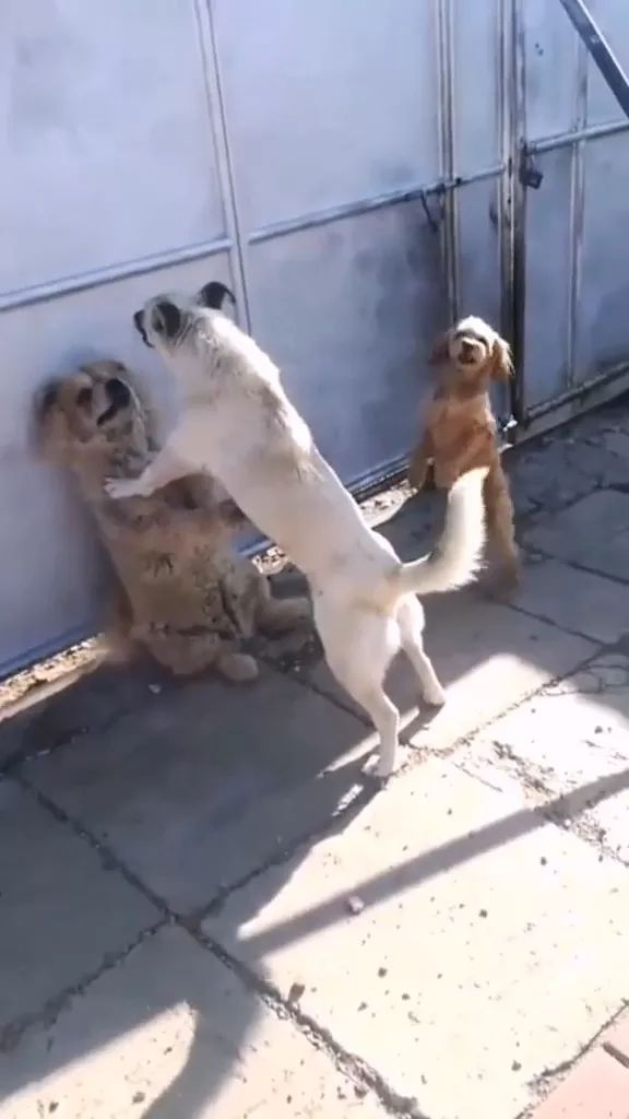 What is happening in dog family