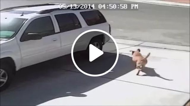 Brave Cat Saves Child On American Street - Video & GIFs | brave cats, cute cats, friendly animals, cute kids, children's fashion clothes, american streets, luxury cars