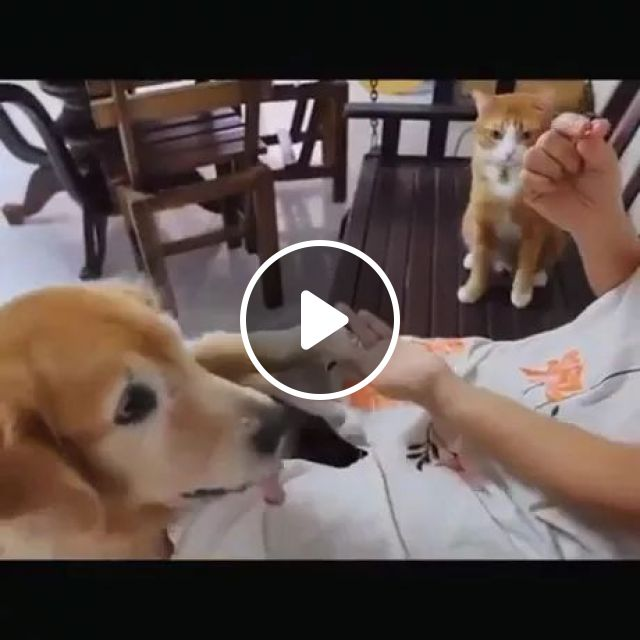Smart Cat Practises His Moves While Waiting His Turn - Video & GIFs | golden retriever, cute kittens, pomeranian, shiba inu puppy, take care of pets