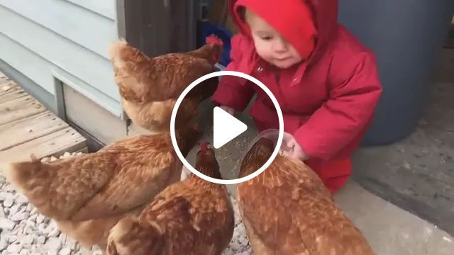 Baby Take Care Of Chickens - Video & GIFs | cute babies, baby clothes, kids shoes, animal food, friendly chickens