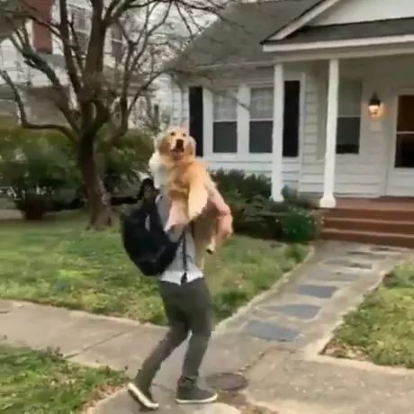 dog is missing you - Video & GIFs | friendly man,fashionable clothes,fashion shoes,golden retriever,beautiful house
