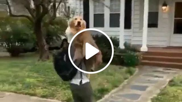 Dog Is Missing You - Video & GIFs | friendly man, fashionable clothes, fashion shoes, golden retriever, beautiful house