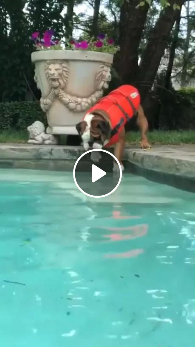 Practice Swimming Weight Loss For Dog - Video & GIFs | exercise pool, weight loss, dog breeds, smart animals, swimming pools