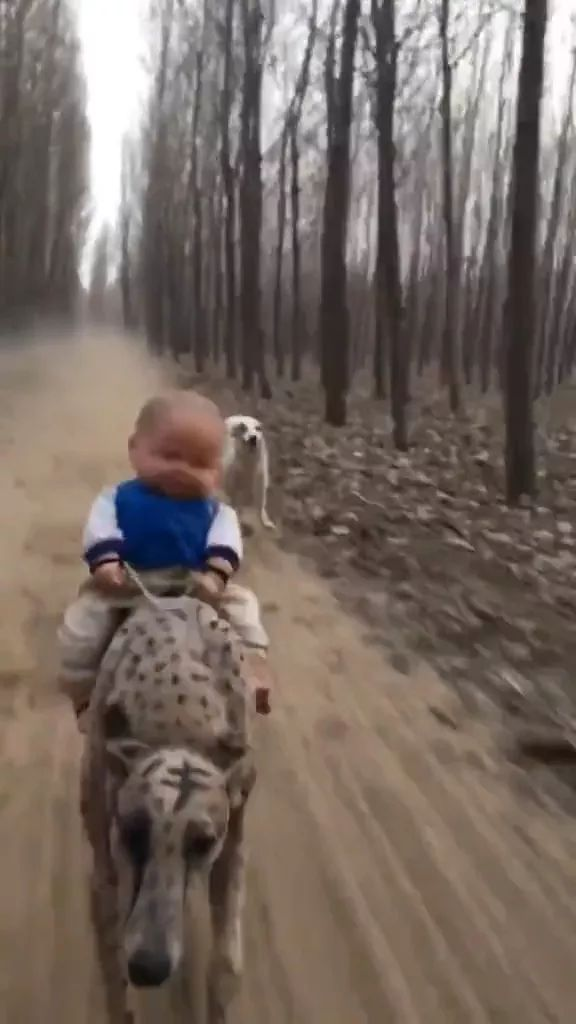 Baby toy and speed dogs - Video & GIFs   baby toys,speed dogs,dog breeds,funny animals