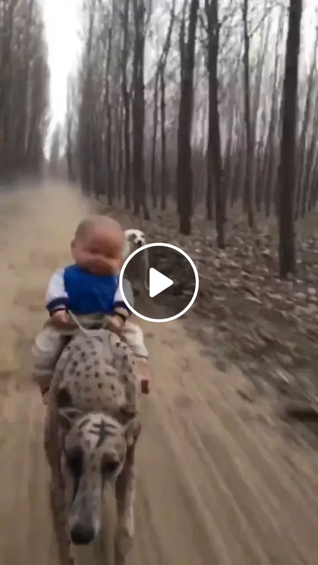 Baby Toy And Speed Dogs - Video & GIFs | baby toys, speed dogs, dog breeds, funny animals